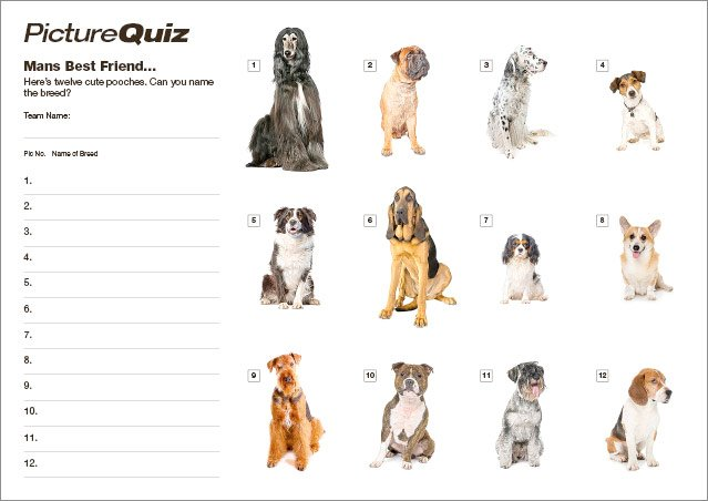 Quiz 113s Name The Dog Breeds Picture Round