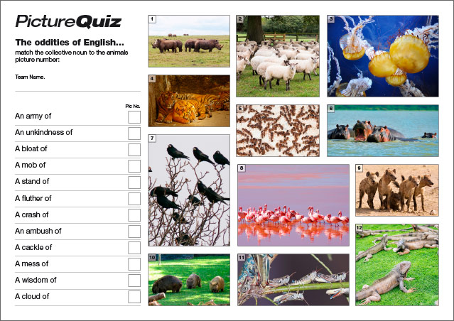 Quiz 037 Collective Nouns