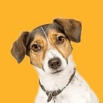 Quiz 113s Featured Image is from the Name The Dog Breeds Picture Round