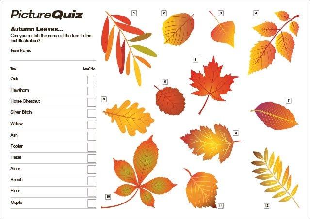 Quiz 133 Autumn Leaves Picture Round